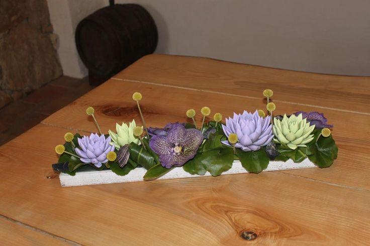 Echeveria miranda pastel purple and green