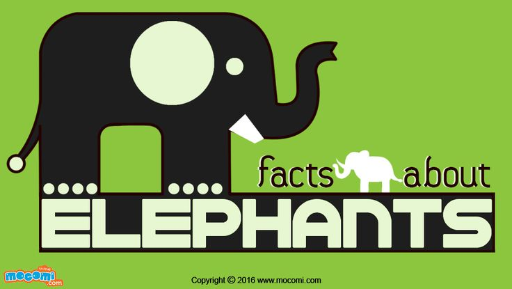 Elephants are the largest mammals that live on earth today. Read all about the mass, lifespan, types, behavior and other facts. For more #GK articles for kids, visit: http://mocomi.com/learn/general-knowledge/