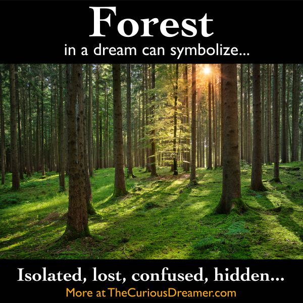 400 best dream journal images on pinterest dream meanings a forest as a dream symbol can mean more at thecuriousdreamer malvernweather Images