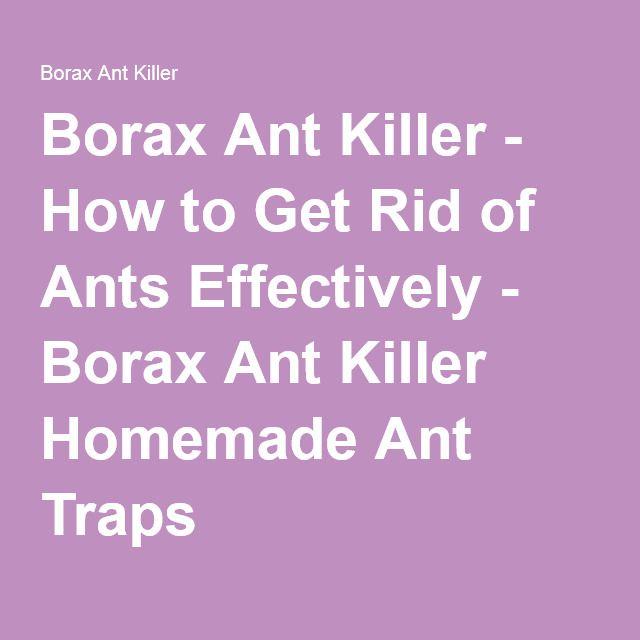 how to kill sugar ants