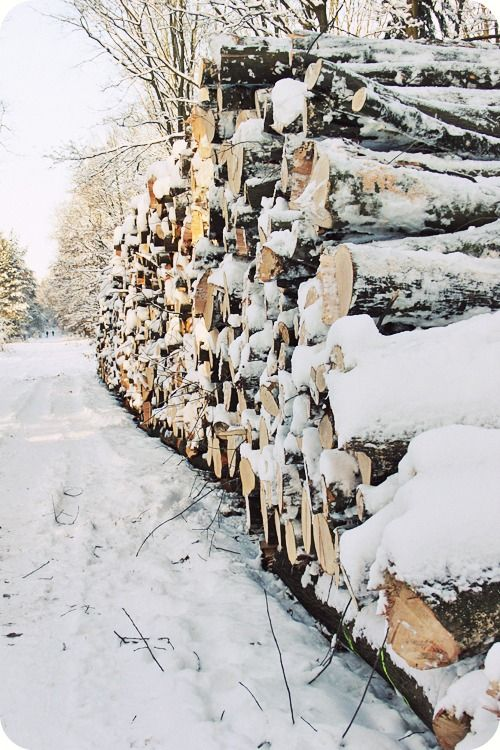 Snow covered wood pile