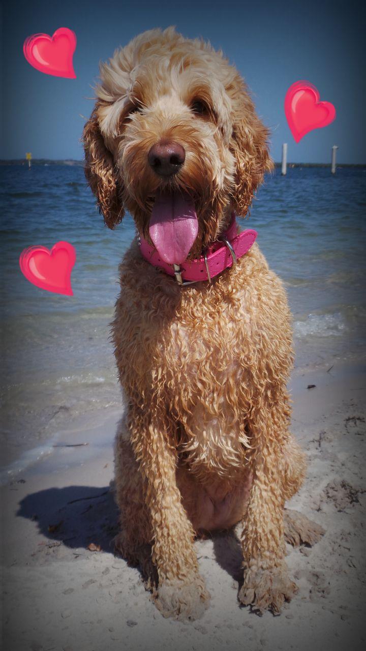 Brenna loves the beach!