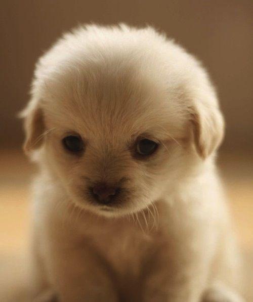 cute puppies ... love it.