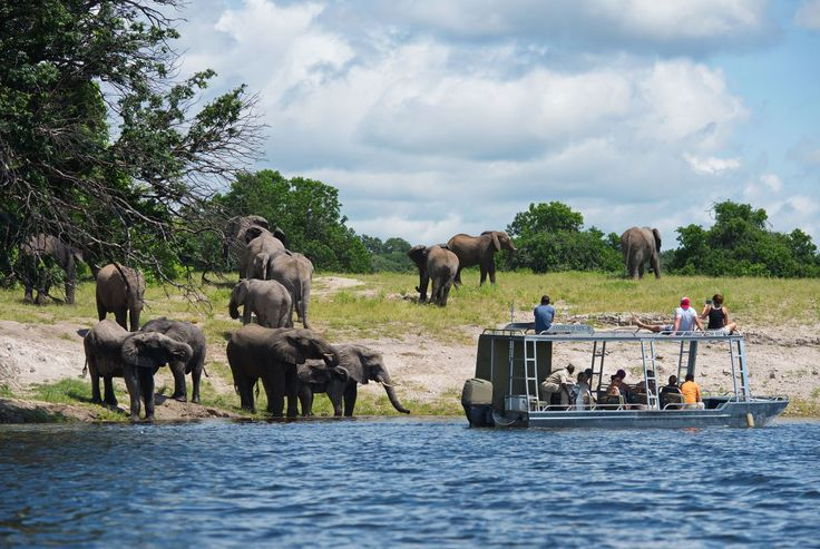 Game viewing along the banks of the Chobe River with the Zambezi Queen Collection     #AfricanRiverSafari #ChobeRiver