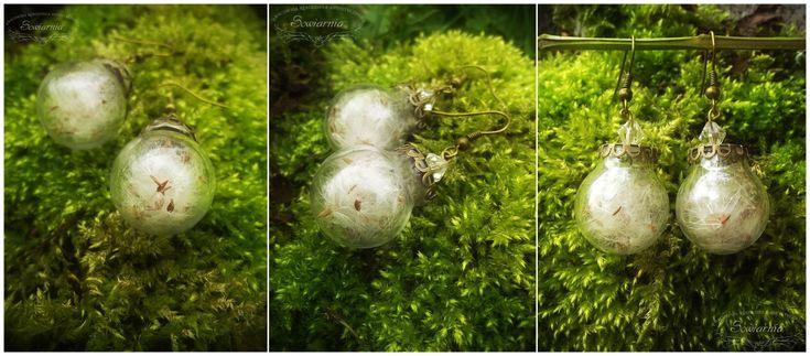 Earrings - glass balls with dandelion seeds.
