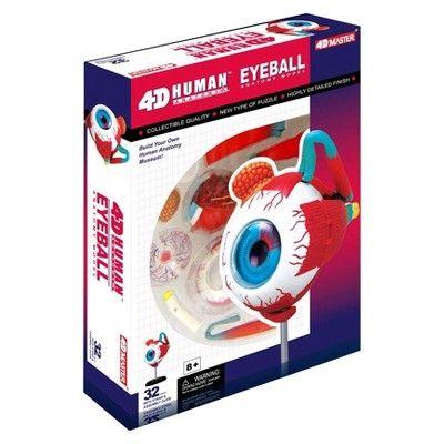 John N. Hansen Human Eyeball Anatomy Model-3.5