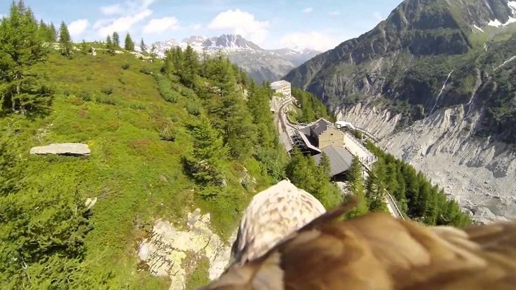 First Person View of an Eagle Flying Through the French Alps