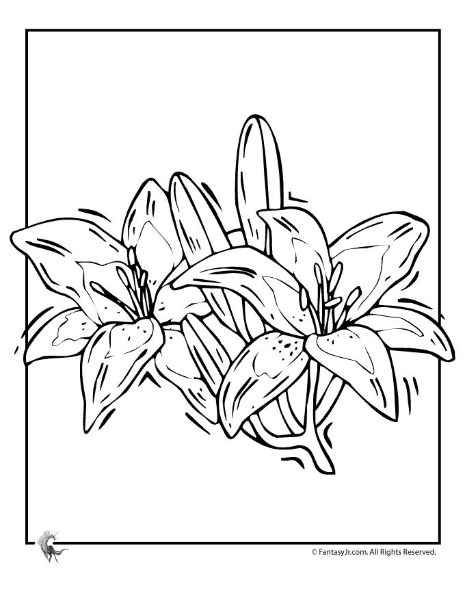 lily flower coloring page