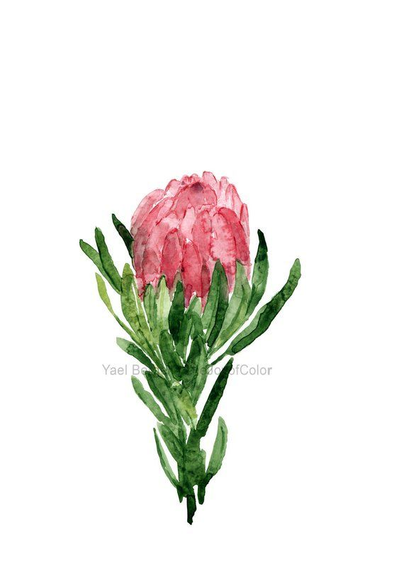 Protea Flower Watercolor Protea Painting Flower Painting Etsy Protea Flower Watercolor Plants Flower Painting