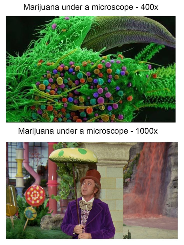 Marijuana under a microscope 400x vs 1000x funny pictures