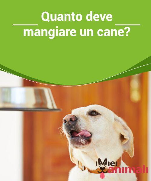 Quanto deve mangiare un cane?   Uno degli #aspetti più importante che preoccupa ai #proprietari di #animali è; quanto cibo deve mangiare un #cane al giorno? #Alimentazione