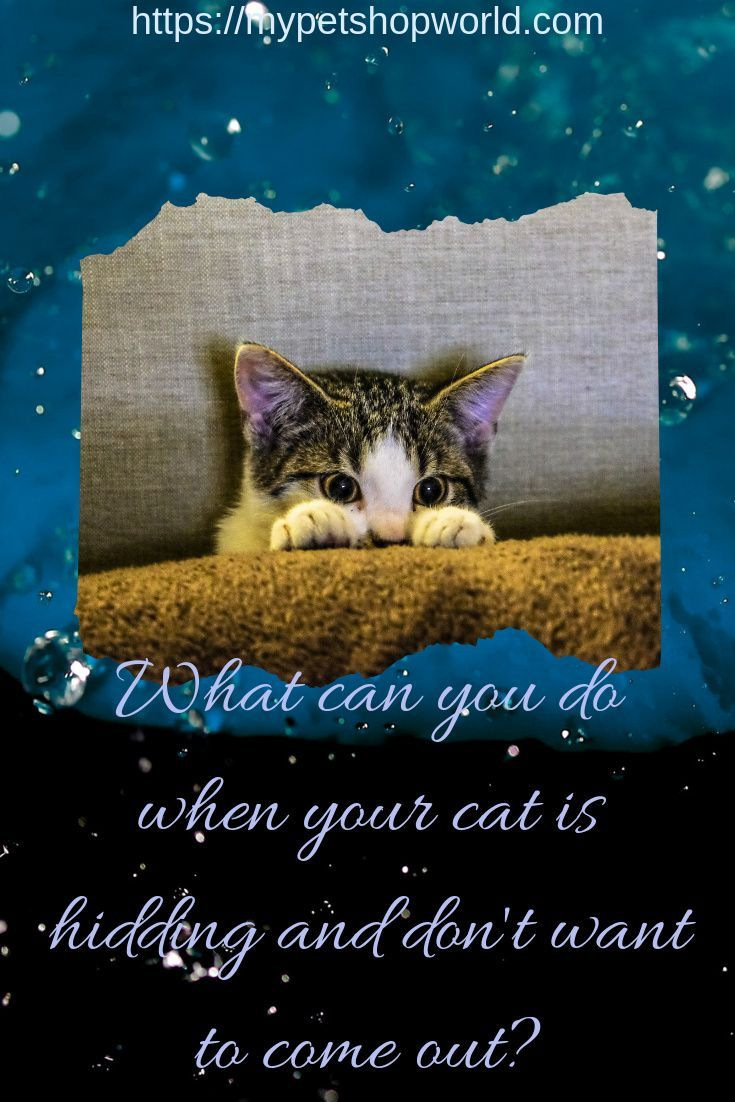 What Cat Owners Must Understand In 2020 Cats Cat Wash Kitten Care