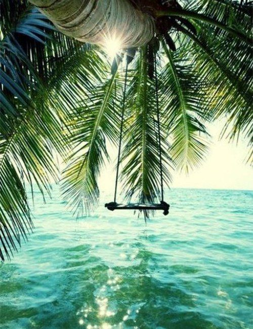 I want like a huge swing for two people to sit on and have it right under that shady palm tree with that breath taking view of the beautiful ocean..