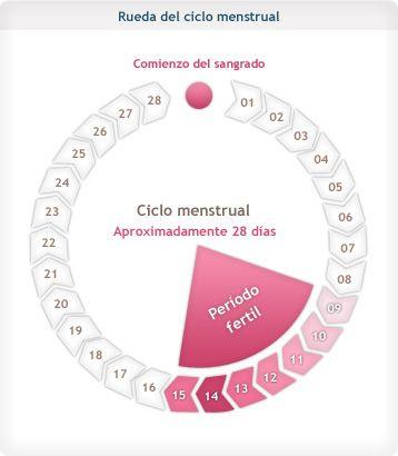 ¿Cómo calcular tus días de ovulación?