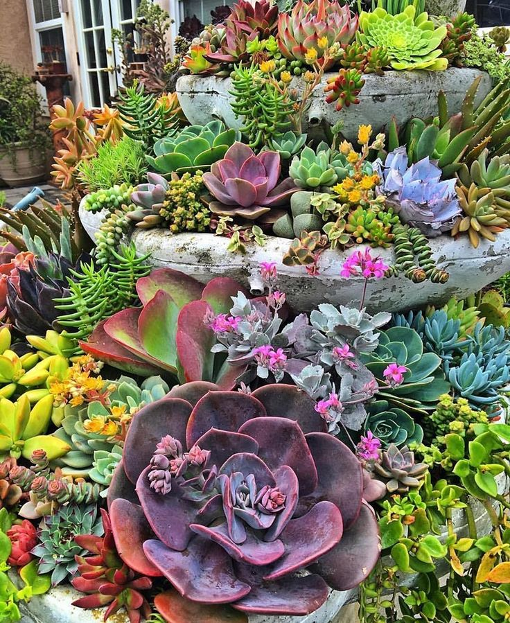 Wicked Awesome Container Garden with Succulents: 45+ Best Design Ideas https://freshouz.com/awesome-container-garden-with-succulents-45-best-design-ideas/