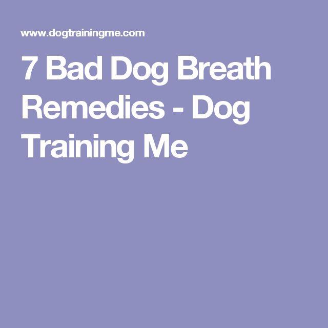 7 Bad Dog Breath Remedies - Dog Training Me