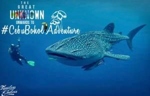 whale-watching-cebu-bohol-adventure11