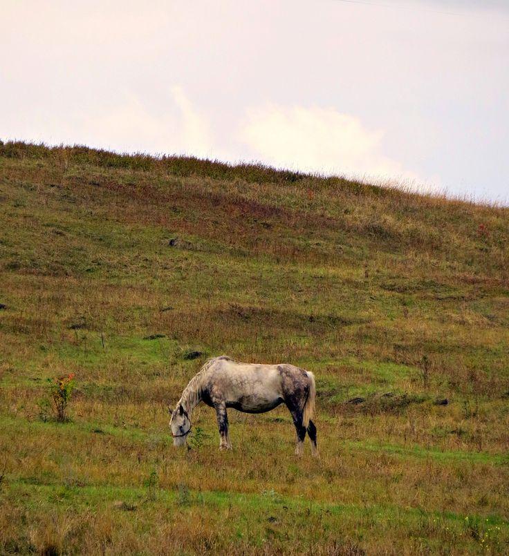 Розовые облака. Лошадь. Осень.