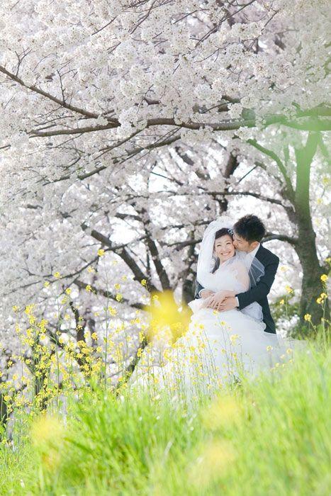 春と桜。ロケーション撮影には最高の環境&時期です。そして何と言っても幸せな二人。幸せオーラが桜と一緒に満開です。大阪淀川沿い河川敷で洋装結婚写真のロケーション撮影。