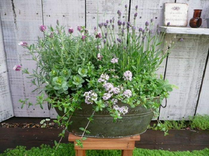 ラベンダーとオレガノが開花中。他にはタイム、ワイルドストロベリーが植えられています。