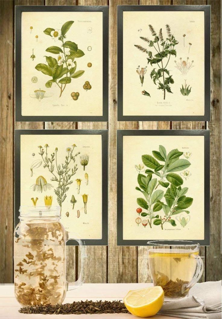 Ink inc tea herbalism herbs vintage botanical
