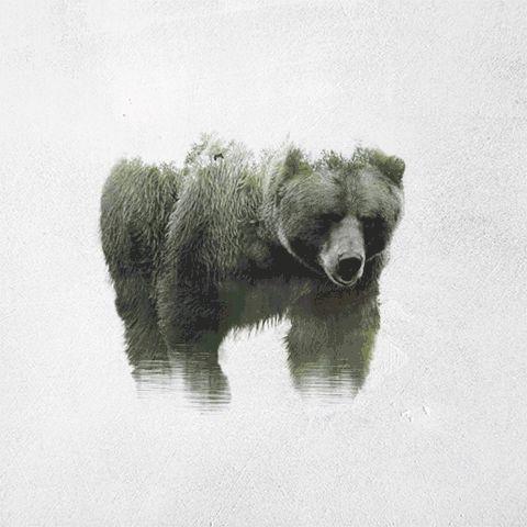Avec son projet Double Exposure Cinemagraphs, l'artiste et photographe turque Said Dagdeviren combine des animaux sauvages avec des paysages animés pour crée