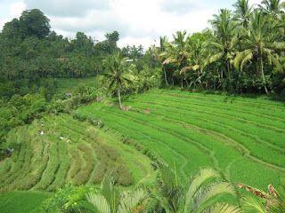Arung Jeram Telaga Waja di Bali, Sangat Menantang | Rafting Bandung