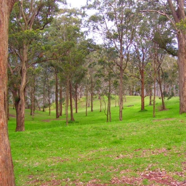 Bush woodland