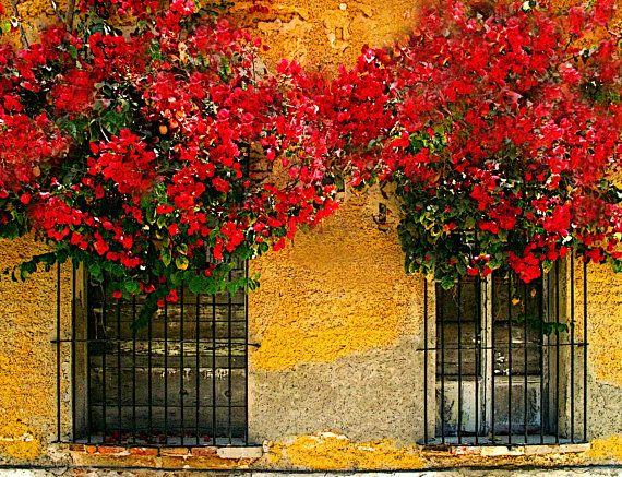 Bougainvillea Blossoms in Old Window 2 El Centro Historico