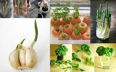 15 Alimentos que você compra uma vez e replanta para sempre