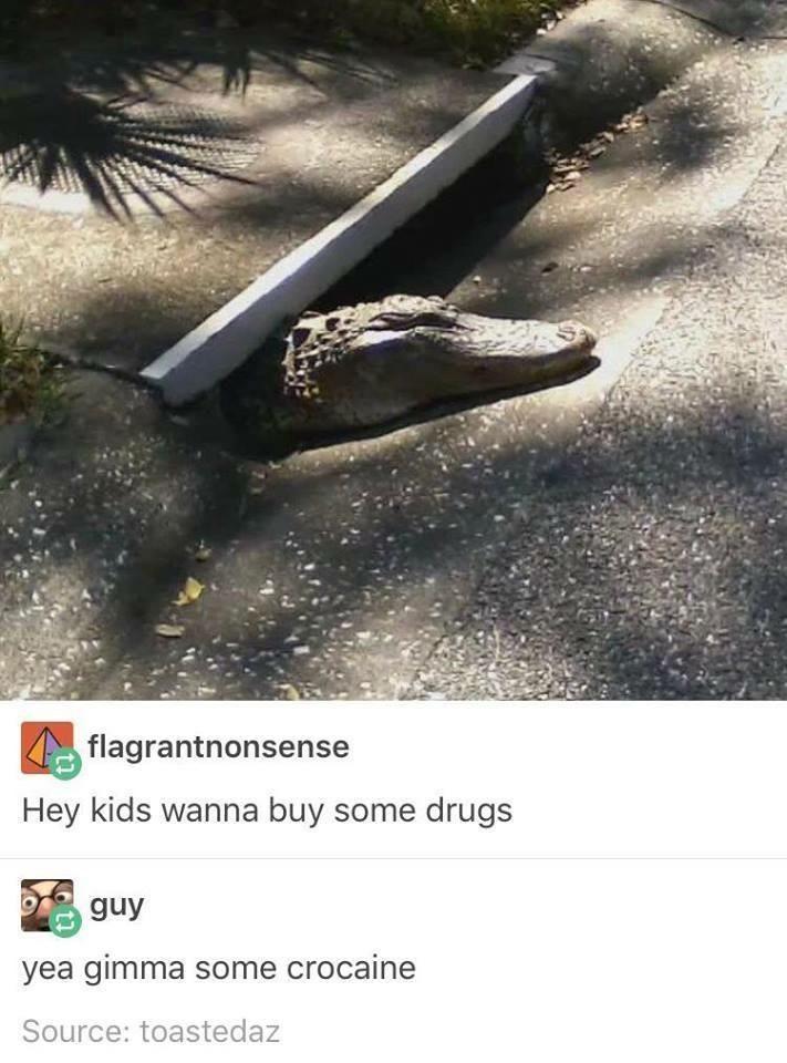 floridian drug dealer