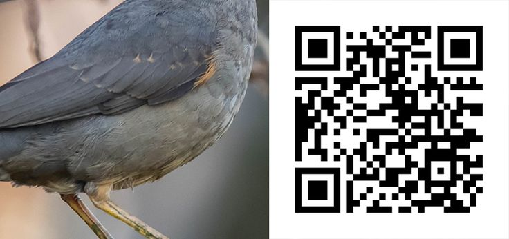 Guess the Bird 50 http://birdwatcher.co.za/guess-the-bird-50/