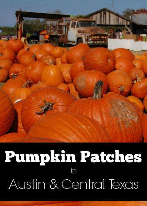 Pumpkin Patches in Austin & Central Texas