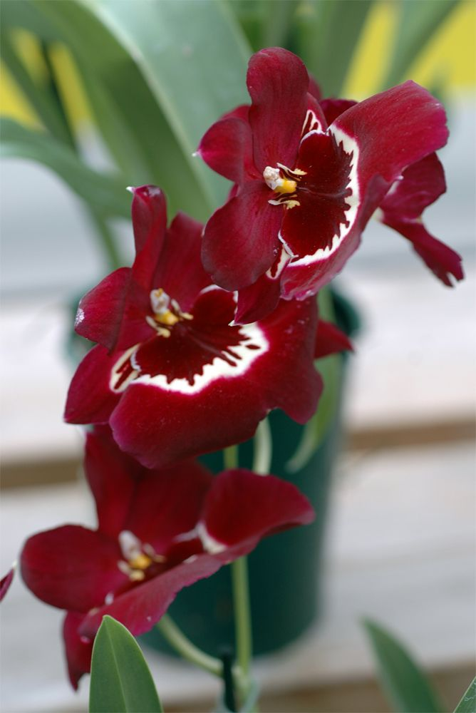 Some of the beautiful orchids we have in stock this year.