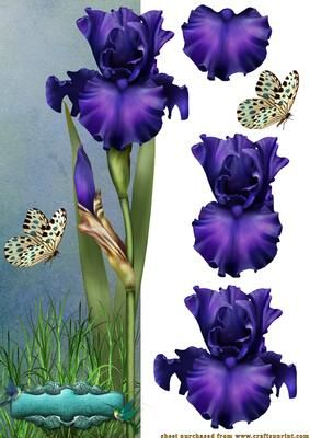 Iris delight on Craftsuprint designed by Debra Jenkinson - A stunning blue Iris over the edge DL card with decoupage. Sentiment panl left blank for your own words - Now available for download!