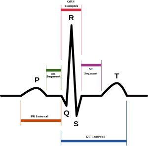 Cardiac electrophysiology - Wikipedia, the free encyclopedia