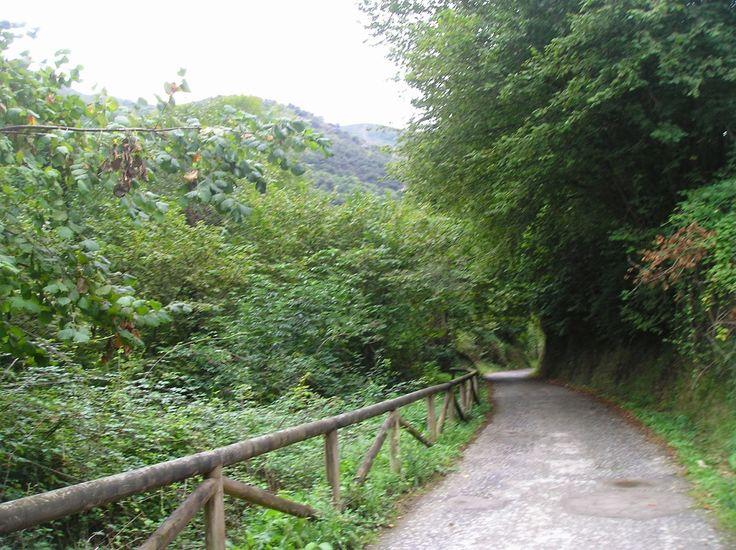 Senda del oso de Teverga  a Quirós. #Asturias