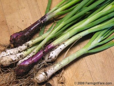 Farmgirl Fare: Wanted: Your Favorite Recipes & Ways to Use Green Onions (Scallions)
