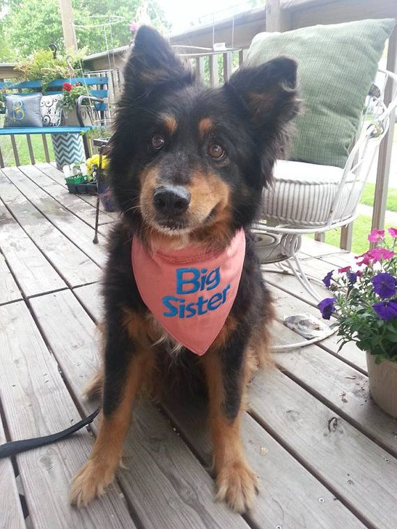 Big Sister Baby Announcement Pet Bandana by Inspirebybannad