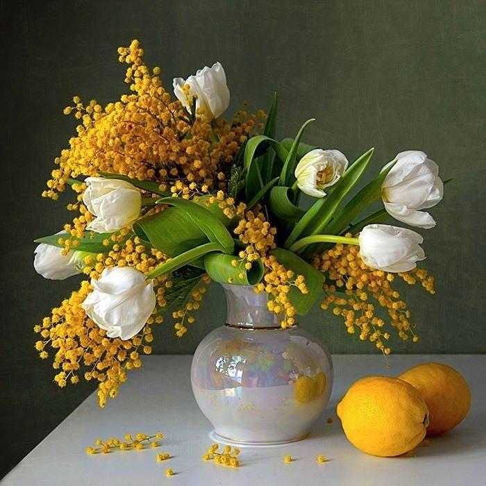 Mimosa et tulipes
