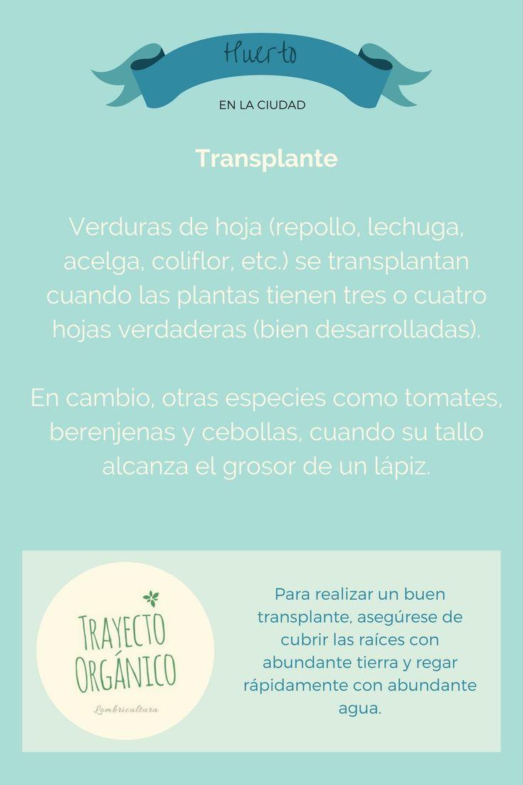 Huerto urbano, cuando realizar el transplante del almácigo al lugar definitivo dependiendo de cada especie de hortaliza.
