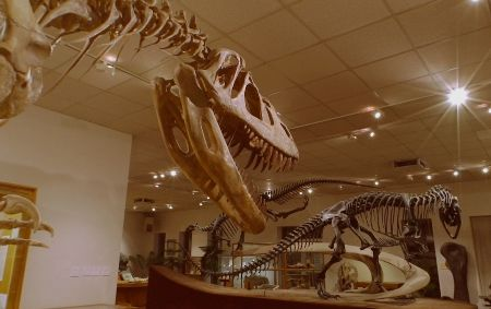 The Brigham Young University Museum of Paleontology in Provo is world-renowned for its extensive collections of late Jurassic and early Cretaceous dinosaurs, including Supersaurus, Torvosaurus and Utahraptor. Exhibits include the largest and smallest dinosaurs, a 150-million year-old Allosaurus egg, fossil plants, minerals and an array of dinosaur, pterosaur and Ice Age mammal skeletons. Observe paleontologists working the lab, touch dinosaur skin and watch videos of our scientists…