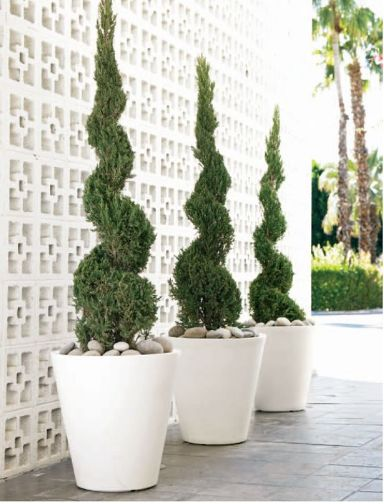 topiaries...I've been wanting Junipers for the front yard, but maybe in pots in the backyard would be nice.