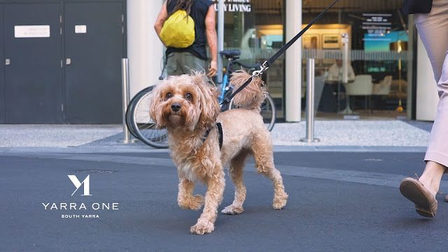 Like Melbourne Report Yarra One Premier Home For Pet Dog