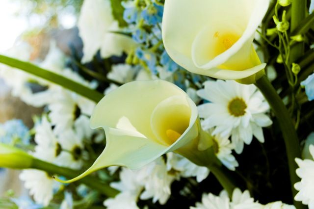 Opt for online delivery service for flowers and cakes to USAhttp://bit.ly/1n7u2wW