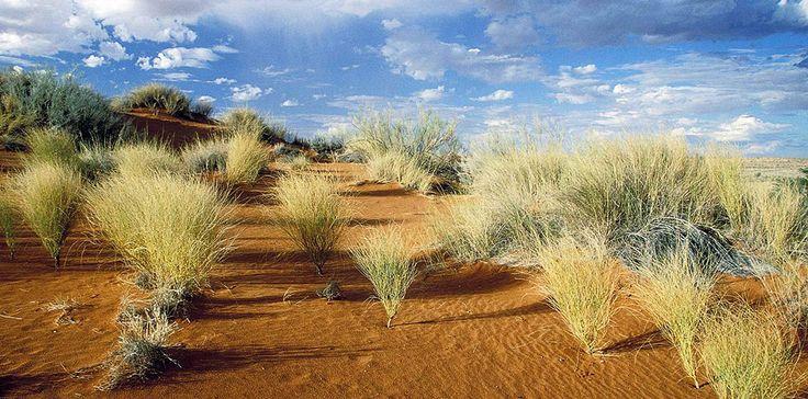 Kgalagadi Transfrontiers Park Parco transnazionale tra Sud Africa e Botswana dove si trova l'area più selvaggia ideale per safari fotografici