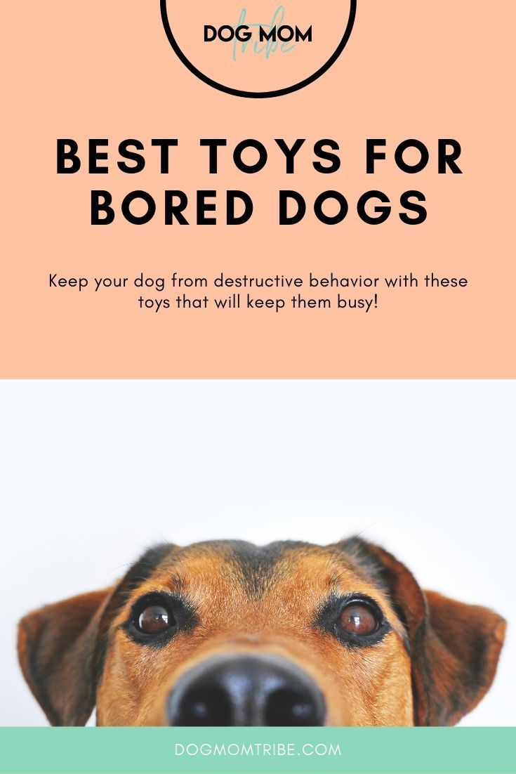 The Best Interactive Dog Toys That Keep Your Dog From Being Bored