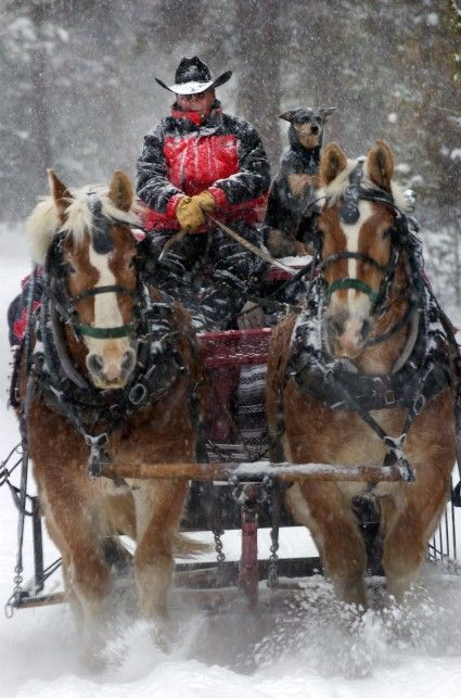 Sleigh Ride. Love the Dog too!