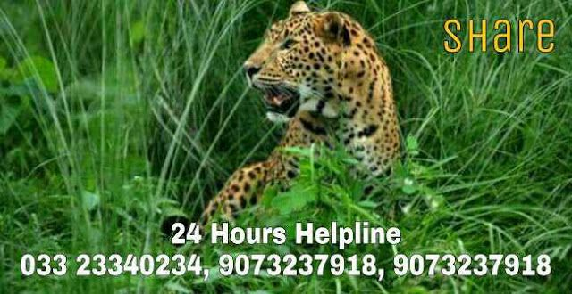 Bengal Forest Department sets up toll-free number for assisting help in rescuing wild animals   Often it happens that wild animals enter localities and then they have to be sent back into forests.  It is the Forest Department which is tasked with this work.  Then poaching forms a major threat to the existence of many wild fauna.  The State Forest Department naturally is seized of the issues and so is constantly on the lookout for ways and means to counter these in a firm manner.  As a step…