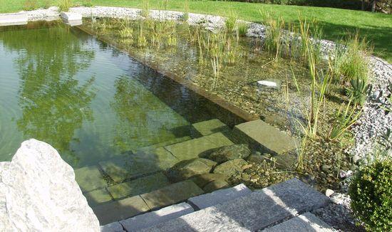 http://www.eljardinonline.es/wp-content/uploads/2013/08/piscina-naturales.jpg